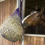 Horse Feeding & Watering