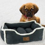 Complementos & Juguetes para Perros