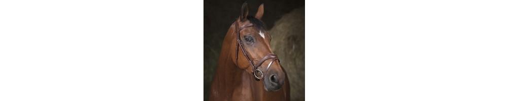 Bridle & Reins | Tuxe Life, Equestrian Shop Online