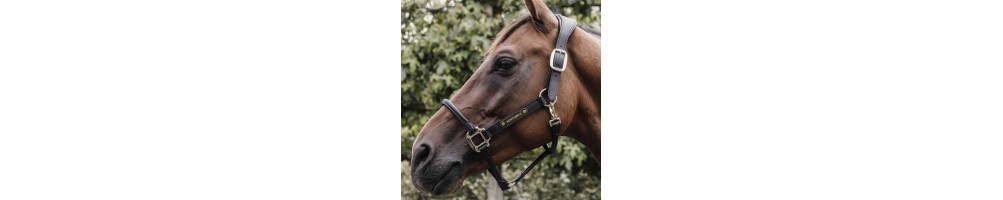 Halters & Lead Ropes   Tuxe Life, Equestrian Shop Online