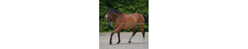 Lunging & Training Aids for Horses   xxx   Tuxe Life, Equestrian Shop Online