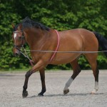 Lunging & Training Aids for Horses